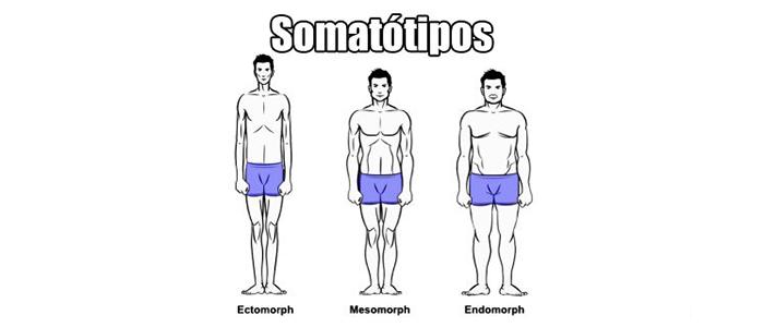Classificação corporal (Somatótipos)